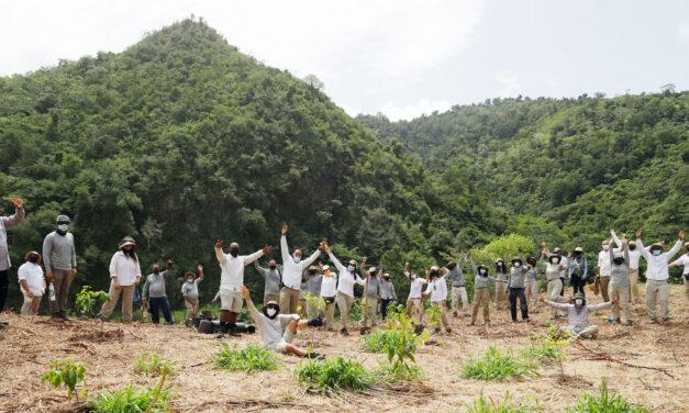 Siembran 5 mil árboles en un solo día