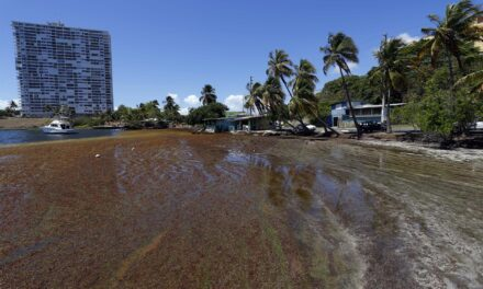 Puerto Rico busca ser «hub» caribeño en uso de sargazo como fuente de energía