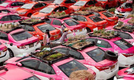 Taxis abandonados en Tailandia son convieridos en huerto para combatir la crisis económica